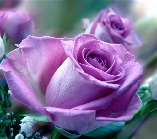 鲜花空间图片 唯美的各色鲜花