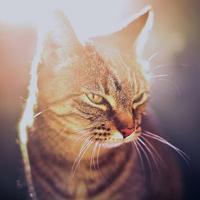 小花猫qq头像 招人喜欢的小花猫