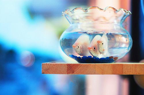 优雅天鹅舞_天鹅湖芭蕾舞黑天鹅_芭蕾舞天鹅之死_芭蕾舞黑天鹅 - www.qqyouyan.com