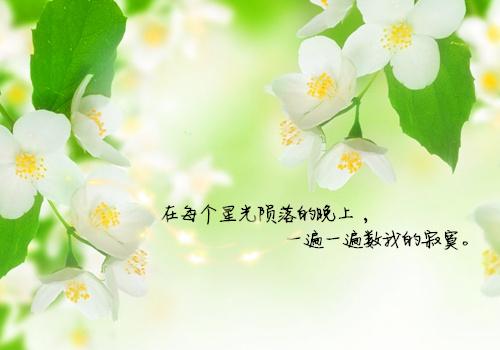 清新意境花朵带字图片 迷人眼的清新花朵图片