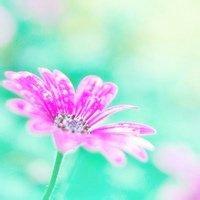 清新美丽花朵头像 每朵花都有自己的美丽